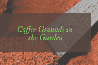 Are coffee grounds good for the garden