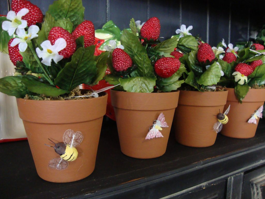 Planting Strawberries in Pots or Containers