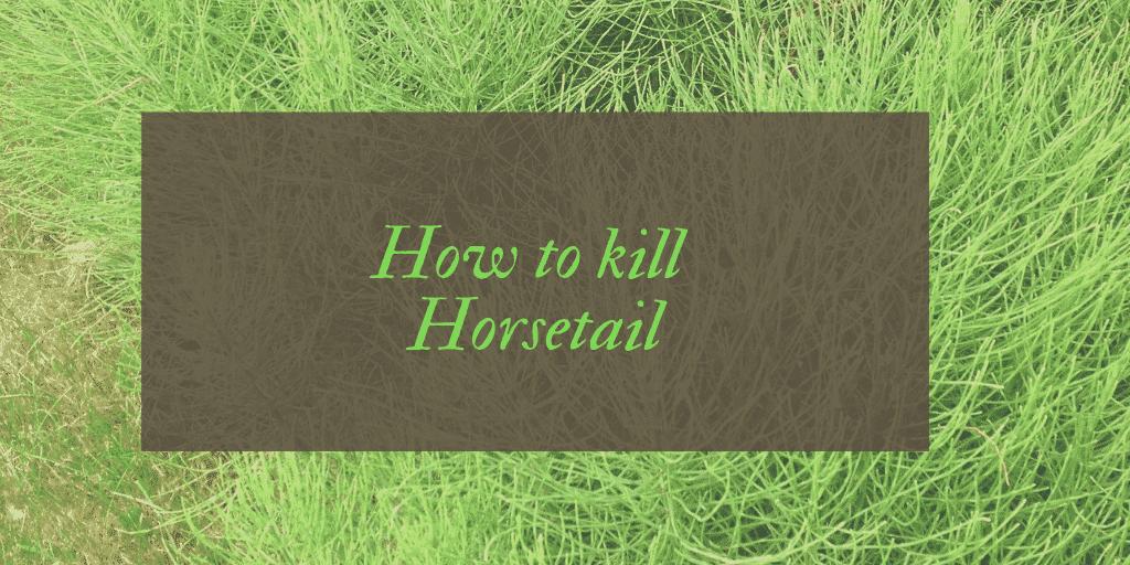 How to kill horsetail UK