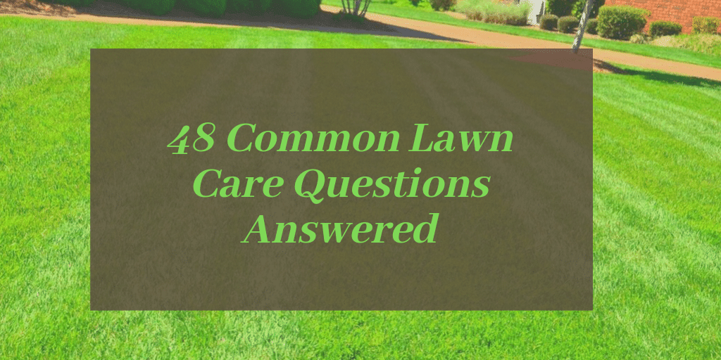 Lawn Care Questions Answered