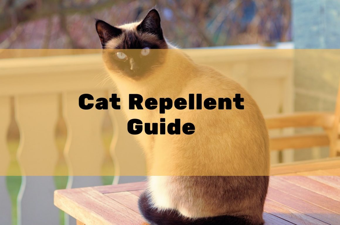 Best Cat Deterrent & Repellent Reviews UK