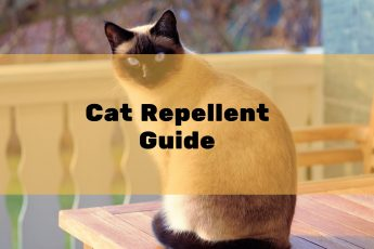 Best Cat Deterrent & Cat Repellents