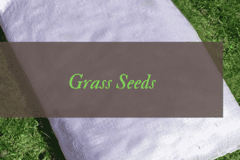 Best Grass Seeds Reviews UK