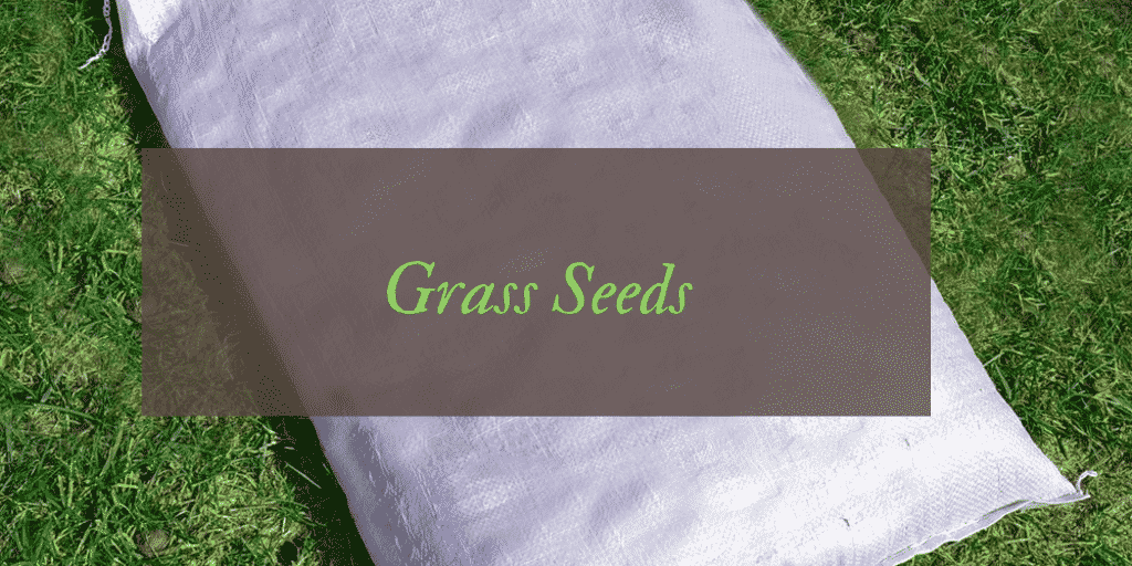 Best Grass Seed Reviews UK