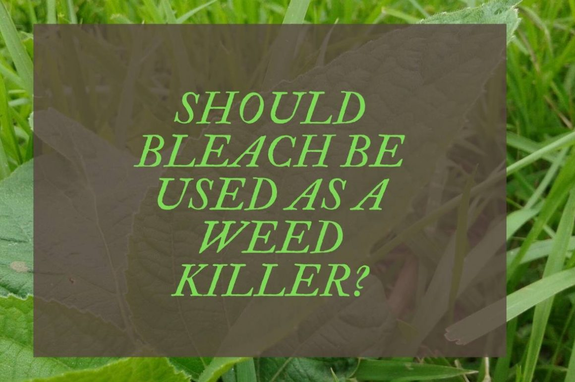 Does Bleach Kill Weeds Using Bleach To Exterminate Weeds