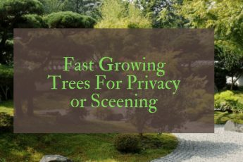 Fast growing trees UK for privacy