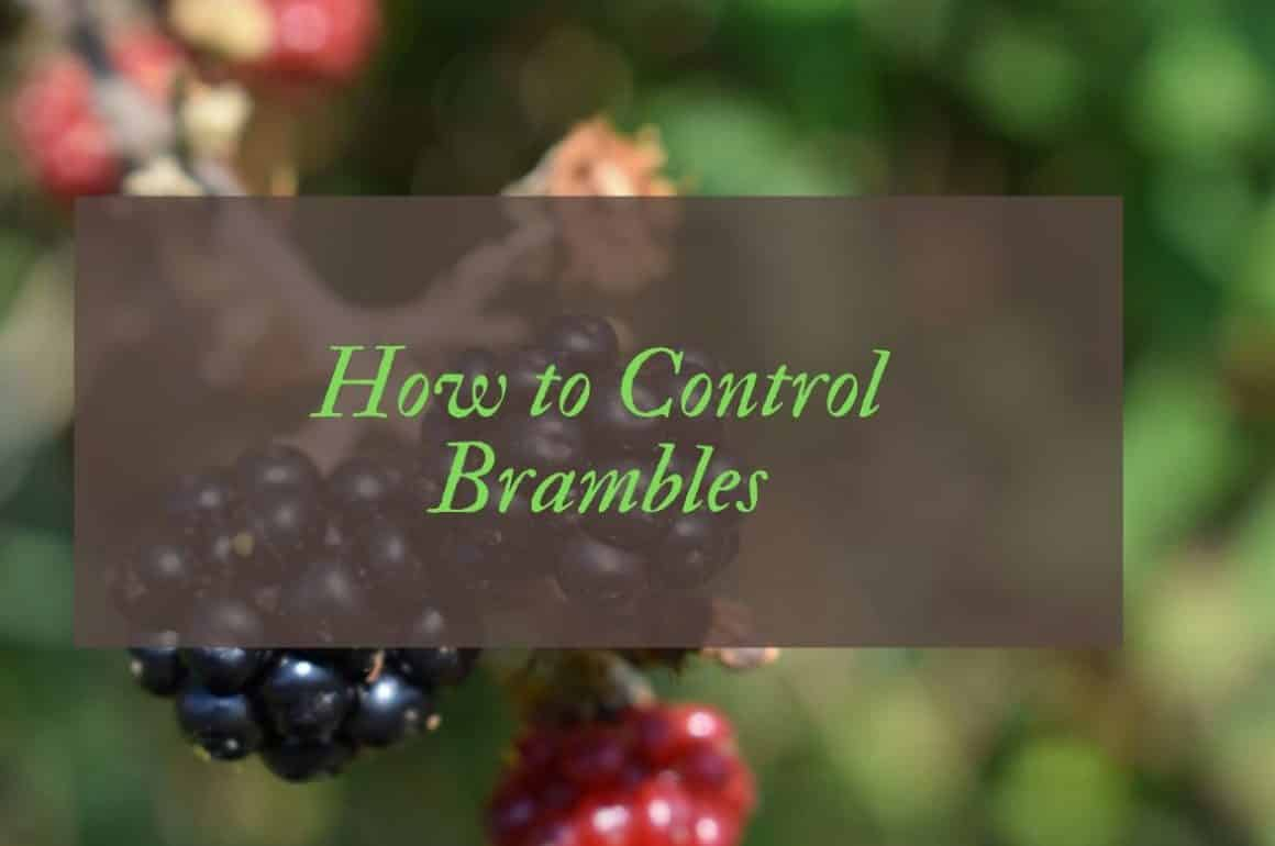 How to kill and get rid of brambles