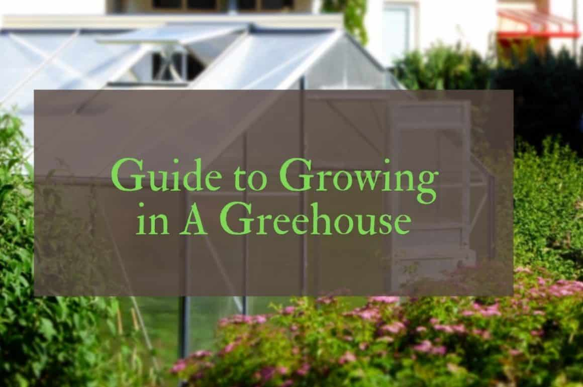 What can you grow in a greenhouse?