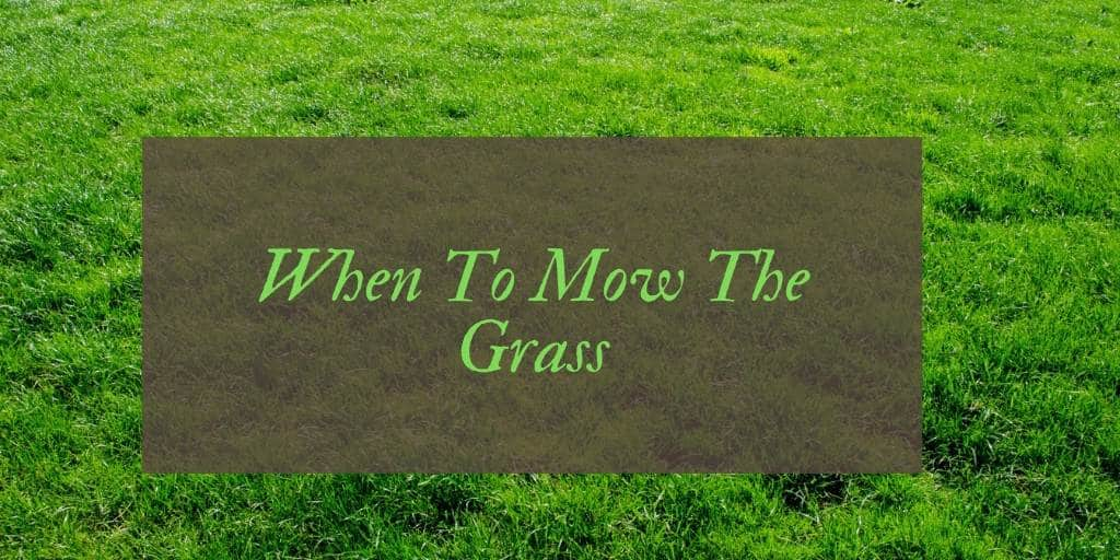 How Often Should You Cut Grass?