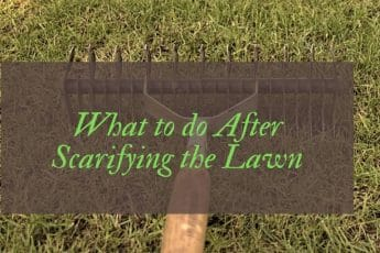 What to do After Scarifying the Lawn