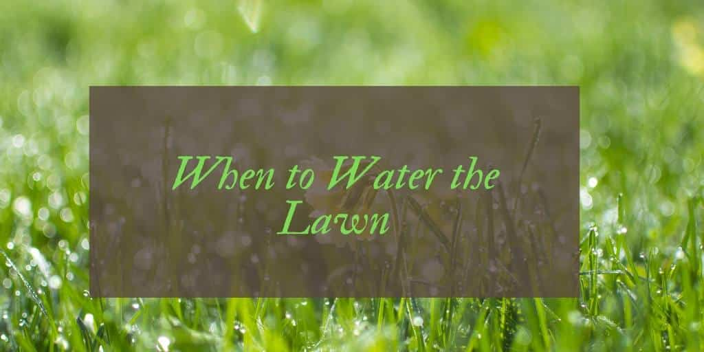 Best Time to Water A Lawn