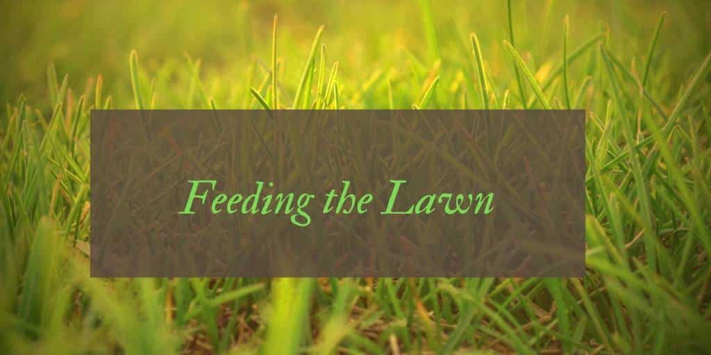 When to Feed the Lawn