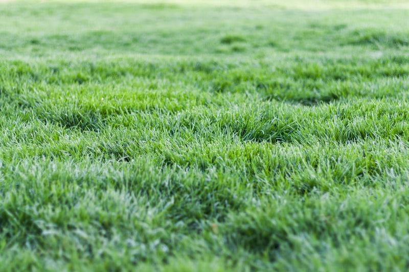 lawn feeding UK