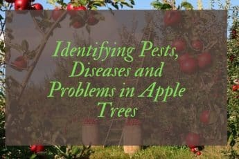 Apple tree pests and diseases UK