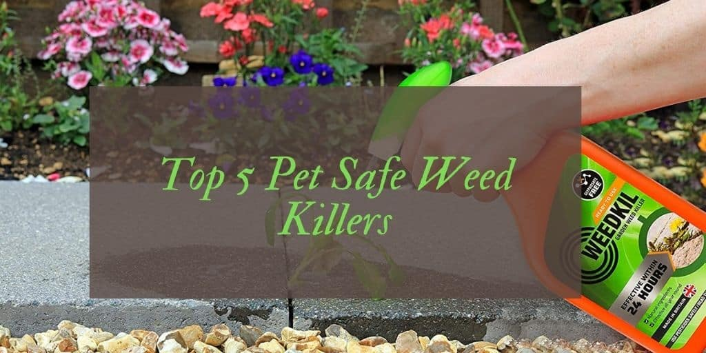 Pet Friendly Weed Killer