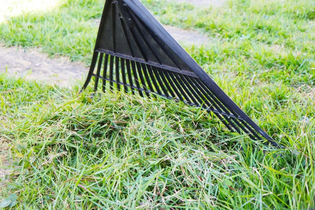 Raking during Spring Lawn Care