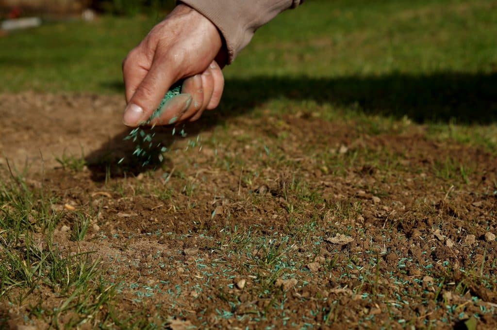 overseeding lawn in spring