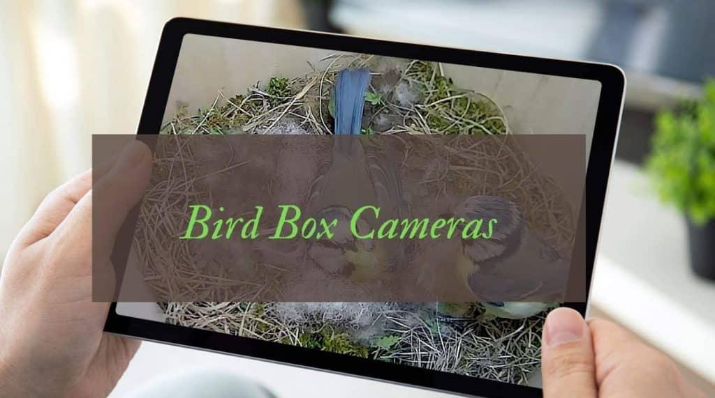 Best Bird Box Cameras Reviews UK
