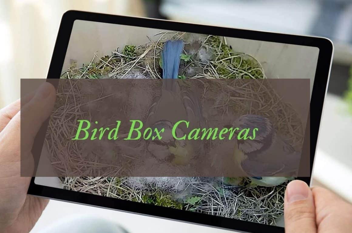 Best Bird Box Cameras For Nest Watching Up Close