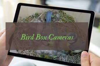 Best Bird Box Cameras Reviews UK