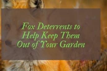 Best Fox Deterrents Reviews UK