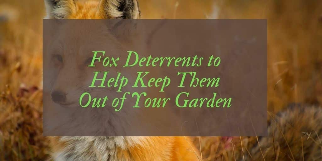 Best Fox Deterrents Reviews UK