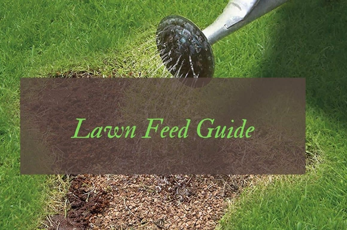 Best Lawn Feed For A Healthy Green Garden