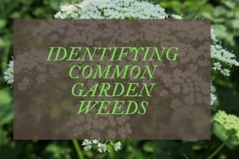 Common Garden Weeds UK -A Complete Identification Guide
