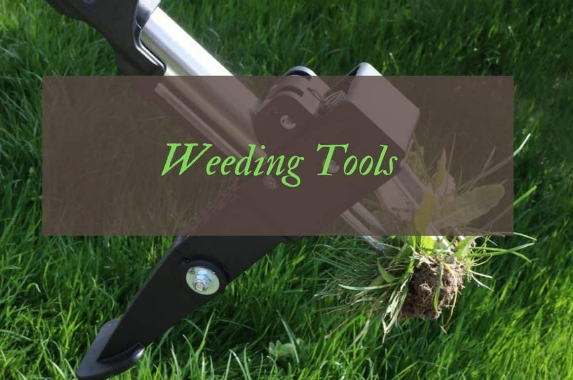 Best Weed Pulling Tools To Easily Remove Weeds